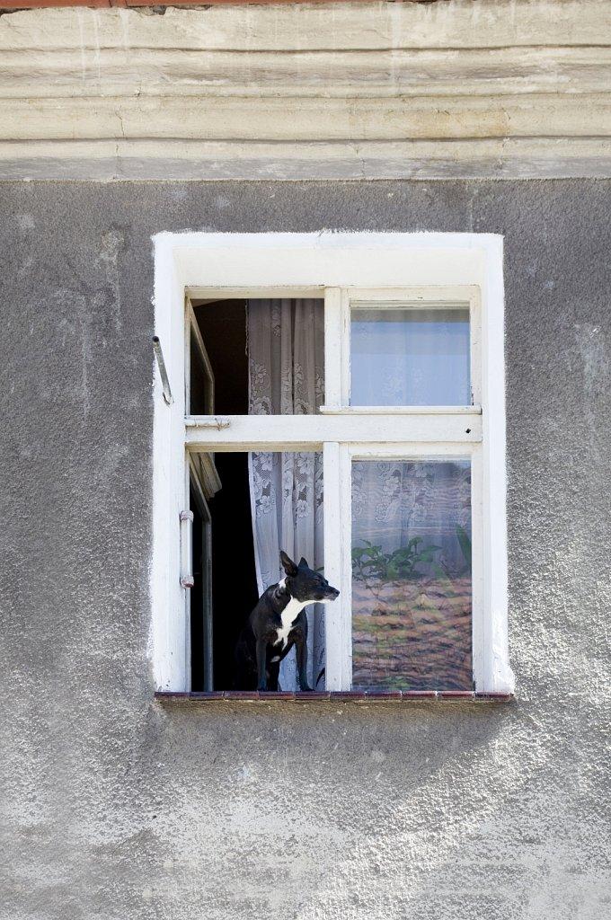 SCHWEIDNITZ-SWIDNICA-Hund-SW.jpg